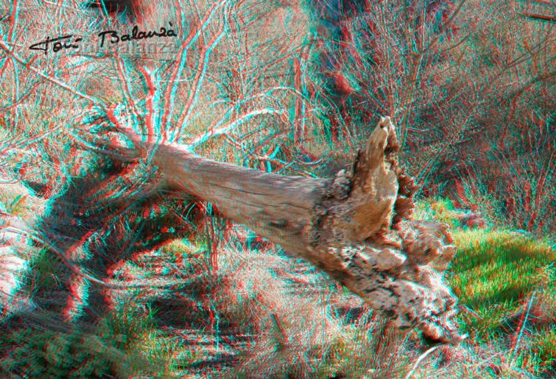 El tronco del olmo viejo de la fuente