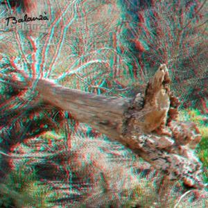 El tronco del olmo viejo de la fuente -