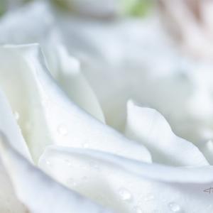 ramo de novia con flores blancas - Fotografía detalle de un ramo de novia con flores blancas realizado en un trabajo comercial para mati, el artista floral de Art Natural floristería.